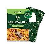Legona® - Schlupfwespen gegen Lebensmittelmotten / 4X Trigram-Karte...